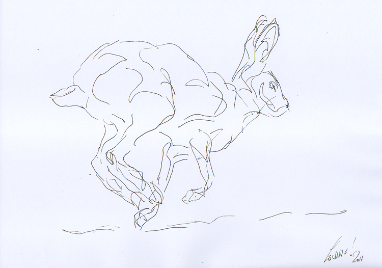 DR 92 - Running hare